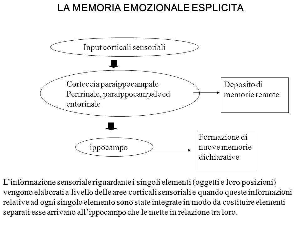 LA MEMORIA EMOZIONALE ESPLICITA ippocampo Formazione di nuove memorie dichiarative Corteccia paraippocampale Peririnale, paraippocampale ed entorinale