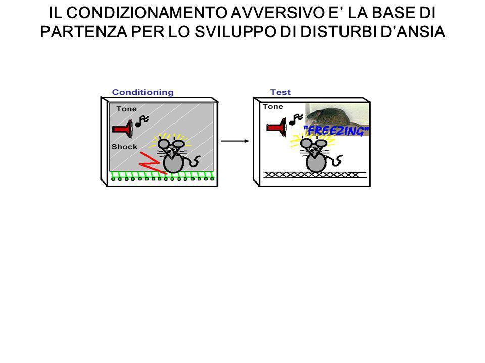 EFFETTI DI UNO STRESS CRONICO SULLIPPOCAMPO E LAMIGDALA Uno stress cronico: immobilizzazione, per 2 ore al giorno per 10 giorni Aumento del numero delle arborizzazioni nei neuroni piramidali dellamigdala basolaterale Riduce la lunghezza dei dendriti dei neuroni piramidali della CA3 nellippocampo Lo stress protratto aumenta leccitabilità dei neuroni ippocampali nella CA1 attraverso meccanismo dipendenti dal calcio ed in tal modo causa la morte di neuroni ippocampali piramidali (Kerr et al 1991).
