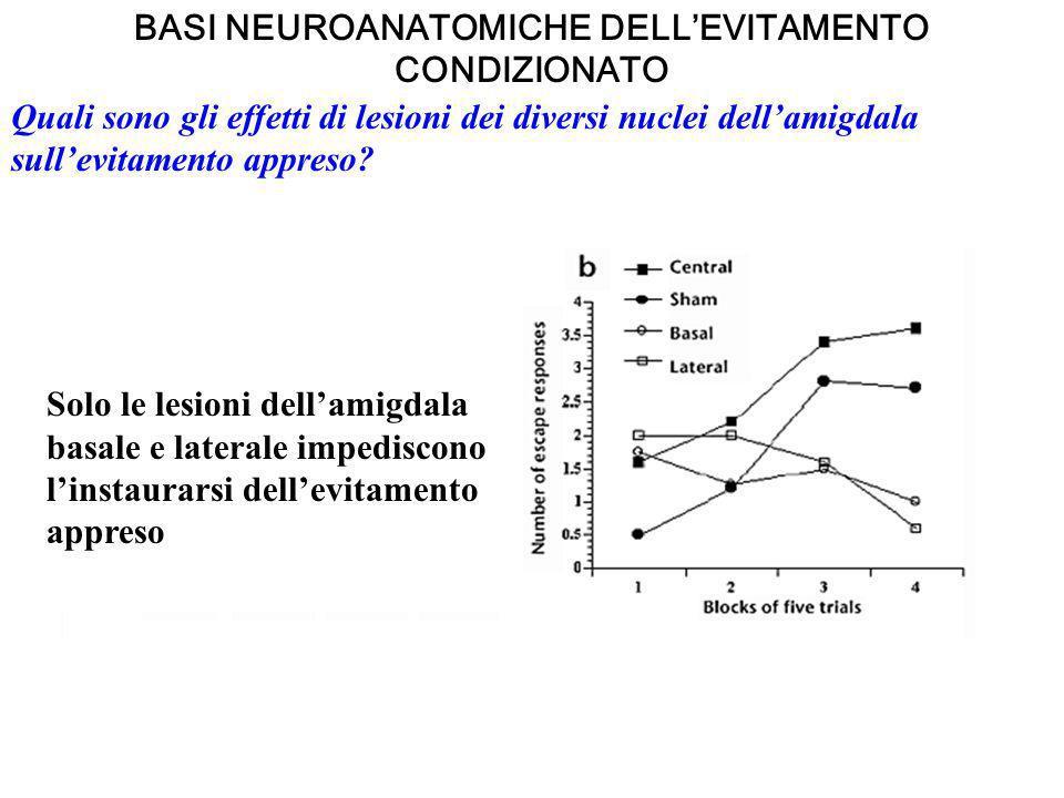 BASI NEUROANATOMICHE DELLEVITAMENTO CONDIZIONATO Quali sono gli effetti di lesioni dei diversi nuclei dellamigdala sullevitamento appreso? Solo le les