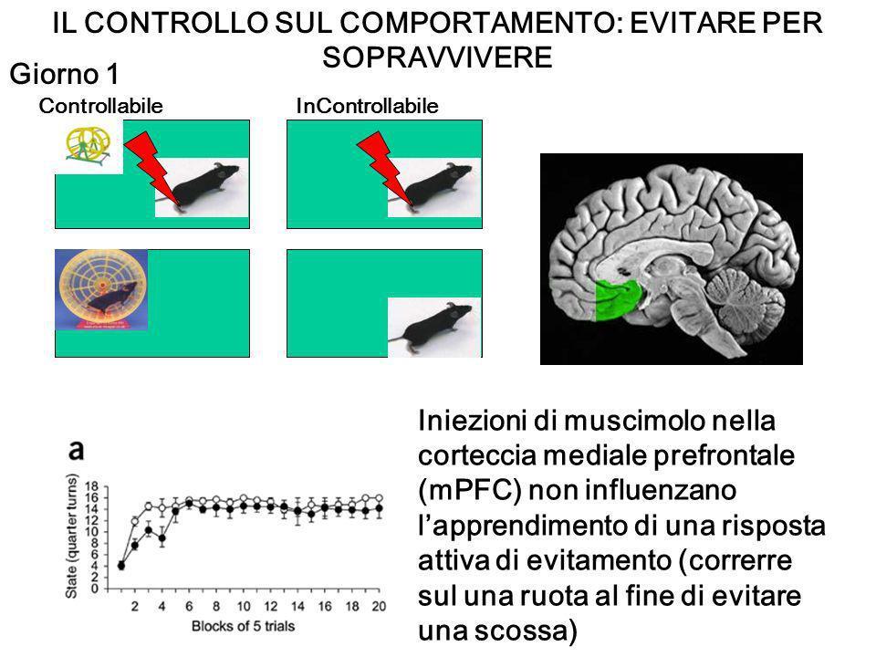 IL CONTROLLO SUL COMPORTAMENTO: EVITARE PER SOPRAVVIVERE ControllabileInControllabile Iniezioni di muscimolo nella corteccia mediale prefrontale (mPFC