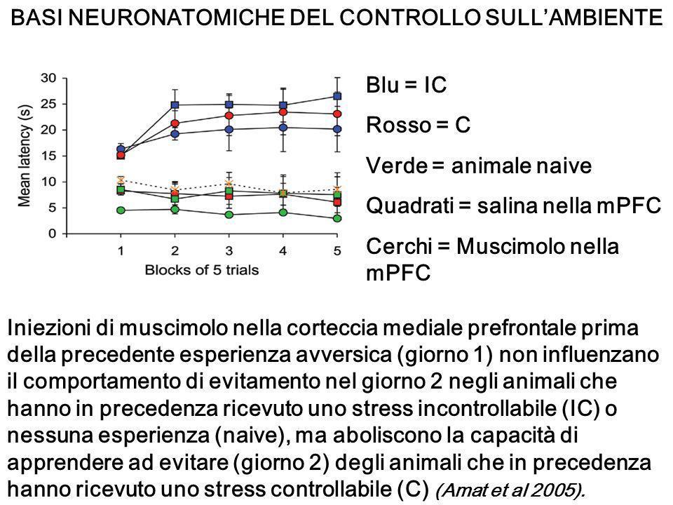 BASI NEURONATOMICHE DEL CONTROLLO SULLAMBIENTE Blu = IC Rosso = C Verde = animale naive Quadrati = salina nella mPFC Cerchi = Muscimolo nella mPFC Ini