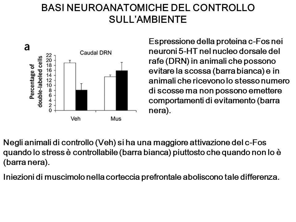BASI NEUROANATOMICHE DEL CONTROLLO SULLAMBIENTE Negli animali di controllo (Veh) si ha una maggiore attivazione del c-Fos quando lo stress è controlla