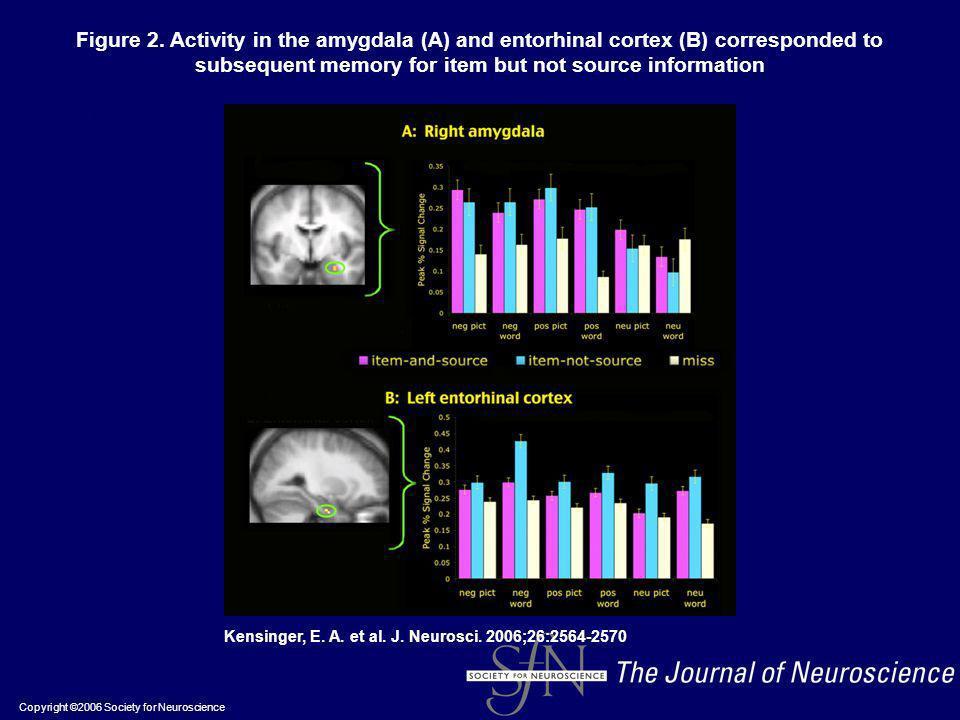 Copyright ©2006 Society for Neuroscience Kensinger, E. A. et al. J. Neurosci. 2006;26:2564-2570 Figure 2. Activity in the amygdala (A) and entorhinal