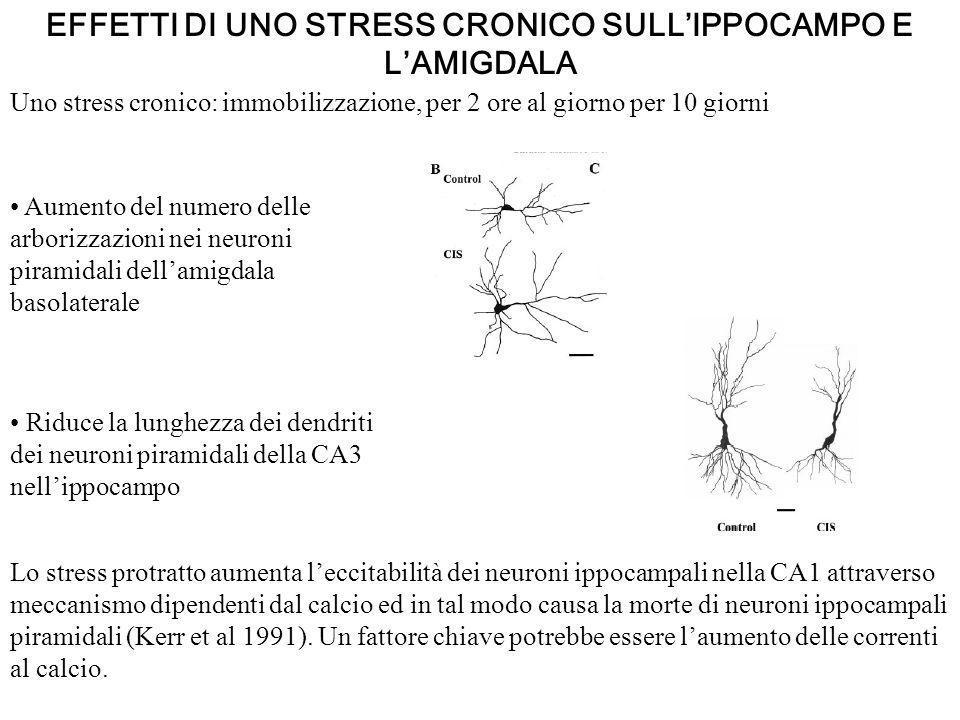 EFFETTI DI UNO STRESS CRONICO SULLIPPOCAMPO E LAMIGDALA Uno stress cronico: immobilizzazione, per 2 ore al giorno per 10 giorni Aumento del numero del