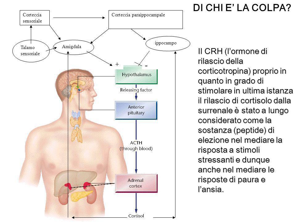 - + Amigdala ippocampo Talamo sensoriale Corteccia sensoriale Corteccia paraippocampale DI CHI E LA COLPA? Il CRH (lormone di rilascio della corticotr