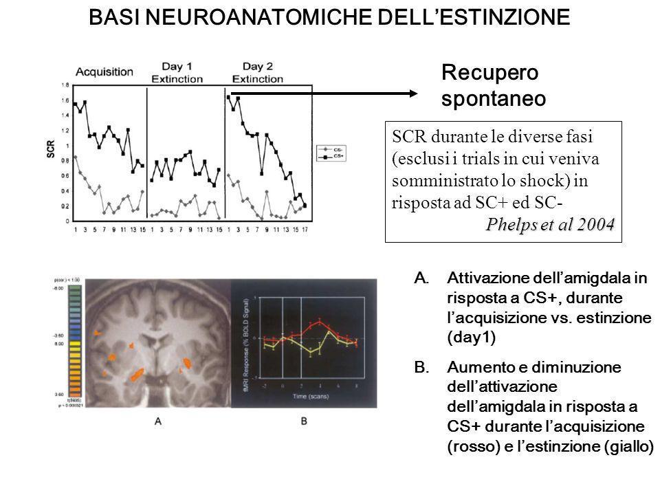 BASI NEUROANATOMICHE DELLESTINZIONE SCR durante le diverse fasi (esclusi i trials in cui veniva somministrato lo shock) in risposta ad SC+ ed SC- Phel