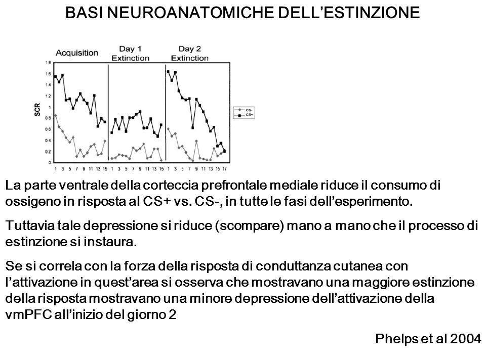 BASI NEUROANATOMICHE DELLESTINZIONE La parte ventrale della corteccia prefrontale mediale riduce il consumo di ossigeno in risposta al CS+ vs. CS-, in