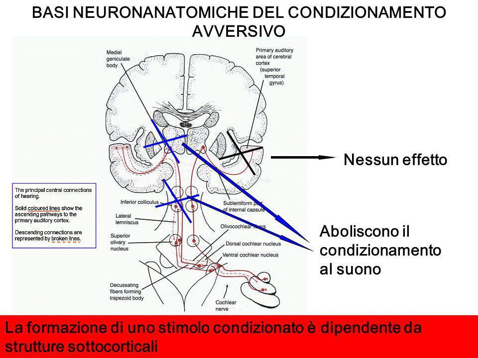 Aboliscono il condizionamento al suono Nessun effetto La formazione di uno stimolo condizionato è dipendente da strutture sottocorticali BASI NEURONAN