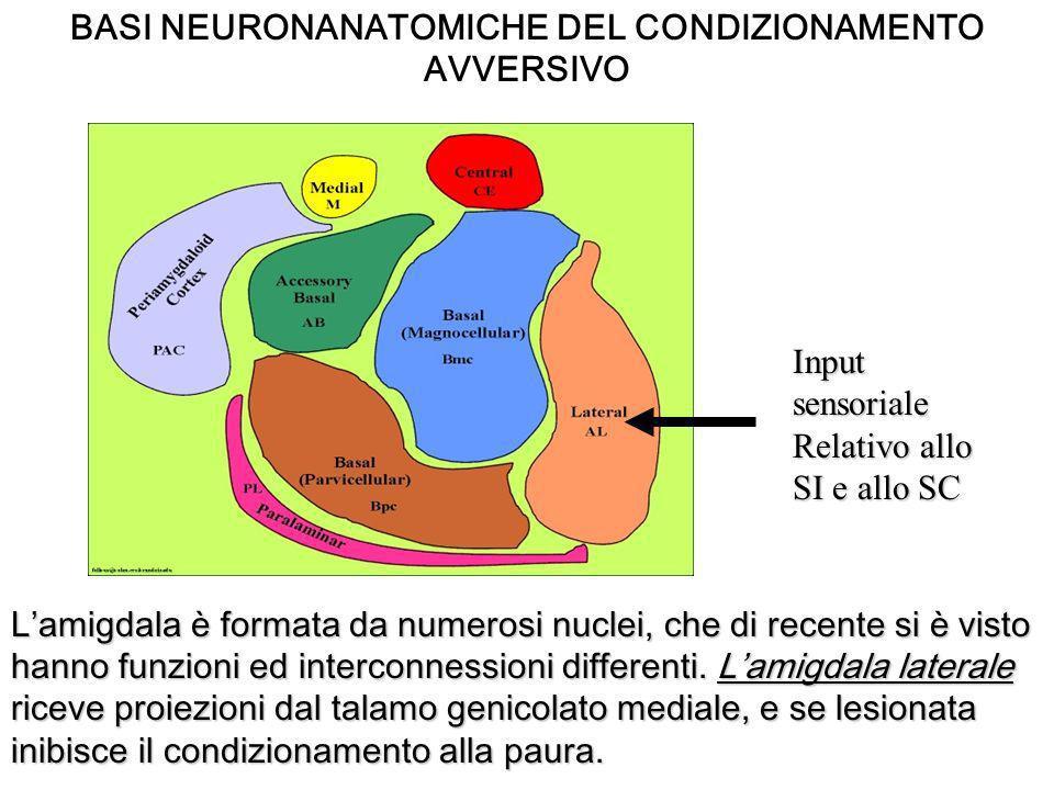 LA MEMORIA EMOZIONALE ESPLICITA ippocampo Formazione di nuove memorie dichiarative Corteccia paraippocampale Peririnale, paraippocampale ed entorinale Deposito di memorie remote Input corticali sensoriali Linformazione sensoriale riguardante i singoli elementi (oggetti e loro posizioni) vengono elaborati a livello delle aree corticali sensoriali e quando queste informazioni relative ad ogni singolo elemento sono state integrate in modo da costituire elementi separati esse arrivano allippocampo che le mette in relazione tra loro.