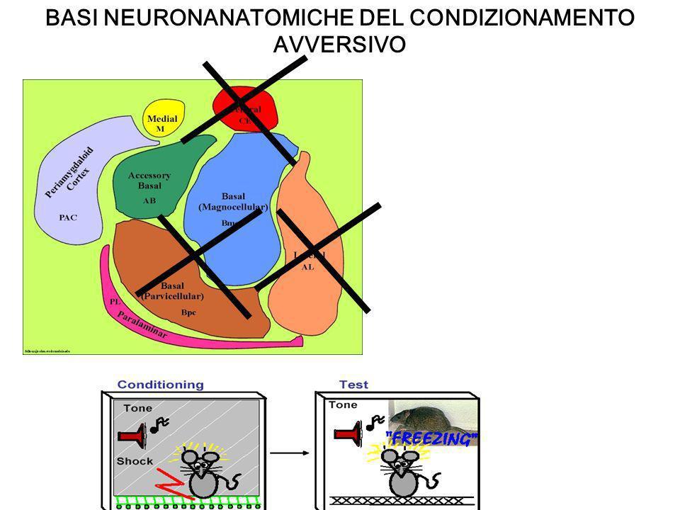 Forte rumore amigdala Attivazione del SNA Memoria emotiva implicita Corteccia sensoriale ippocampo Memoria esplicita dellevento Incontrarsi nel presente, ovvero nella memoria di lavoro per creare unesperienza emotiva cosciente Corteccia prefrontale PER UNA MEMORIA EMOZIONALE COMPLETA