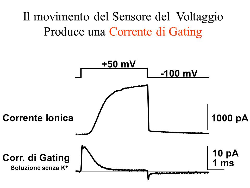+50 mV -100 mV Corr. di Gating Soluzione senza K + 1000 pA 10 pA 1 ms Corrente Ionica Il movimento del Sensore del Voltaggio Produce una Corrente di G