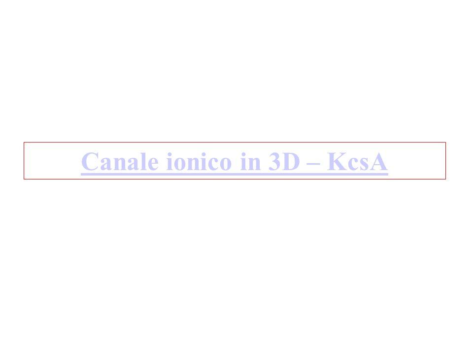 La struttura del canale del K + KvAP è descritta in: A.