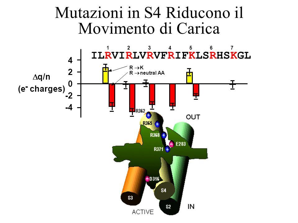 ILRVIRLVRVFRIFKLSRHSKGL 4 2 0 -2 -4 q/n (e - charges) 1234567 R K R neutral AA Mutazioni in S4 Riducono il Movimento di Carica