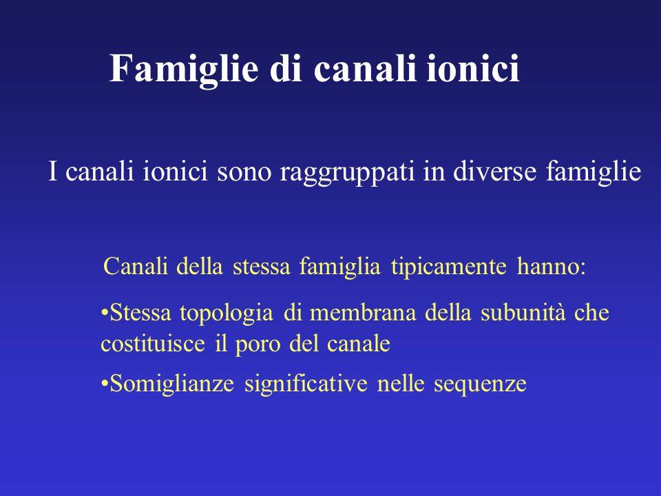 Famiglie di canali ionici I canali ionici sono raggruppati in diverse famiglie Canali della stessa famiglia tipicamente hanno: Stessa topologia di mem