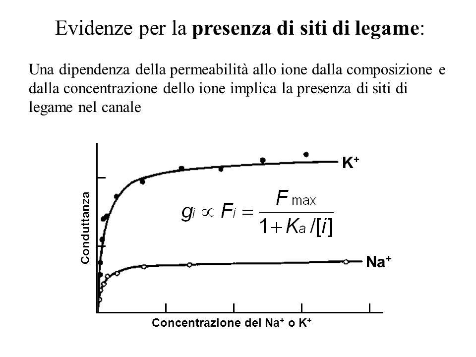 Evidenze per la presenza di siti di legame: Una dipendenza della permeabilità allo ione dalla composizione e dalla concentrazione dello ione implica l