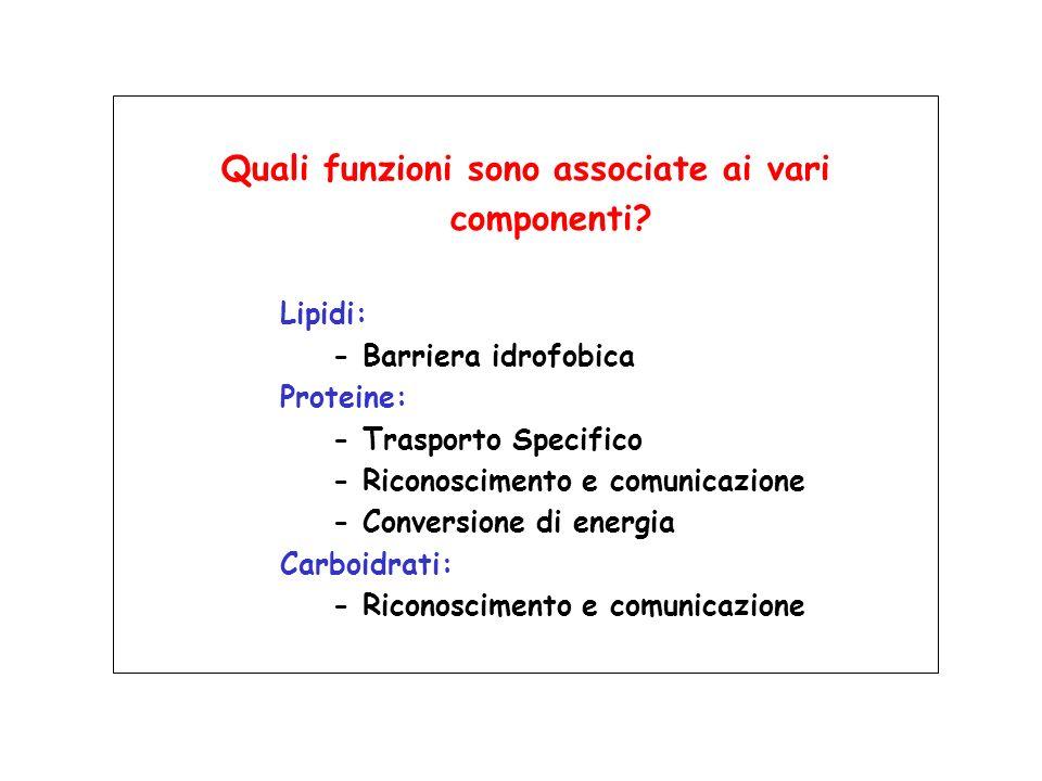 Composizione in lipidi della membrana plasmatica