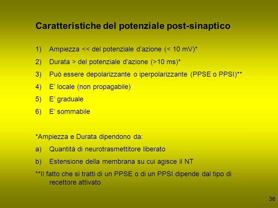 36 Caratteristiche del potenziale post-sinaptico 1)Ampiezza << del potenziale dazione (< 10 mV)* 2)Durata > del potenziale dazione (>10 ms)* 3)Può ess