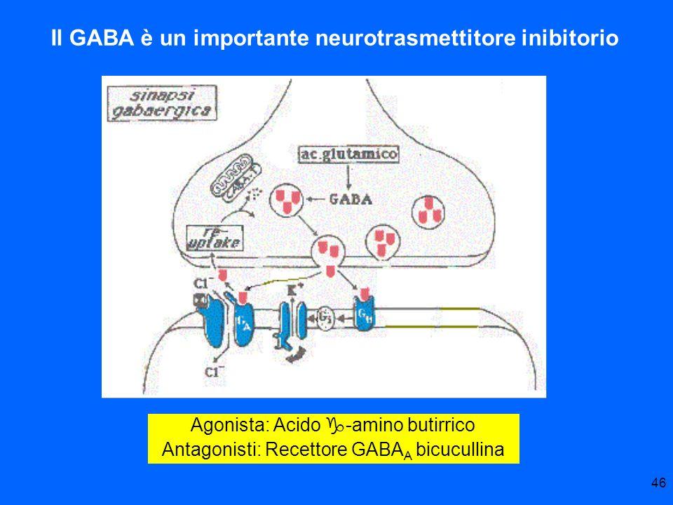 46 Agonista: Acido g-amino butirrico Antagonisti: Recettore GABA A bicucullina Il GABA è un importante neurotrasmettitore inibitorio