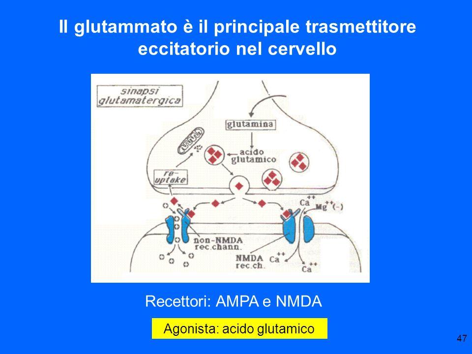 47 Agonista: acido glutamico Il glutammato è il principale trasmettitore eccitatorio nel cervello Recettori: AMPA e NMDA