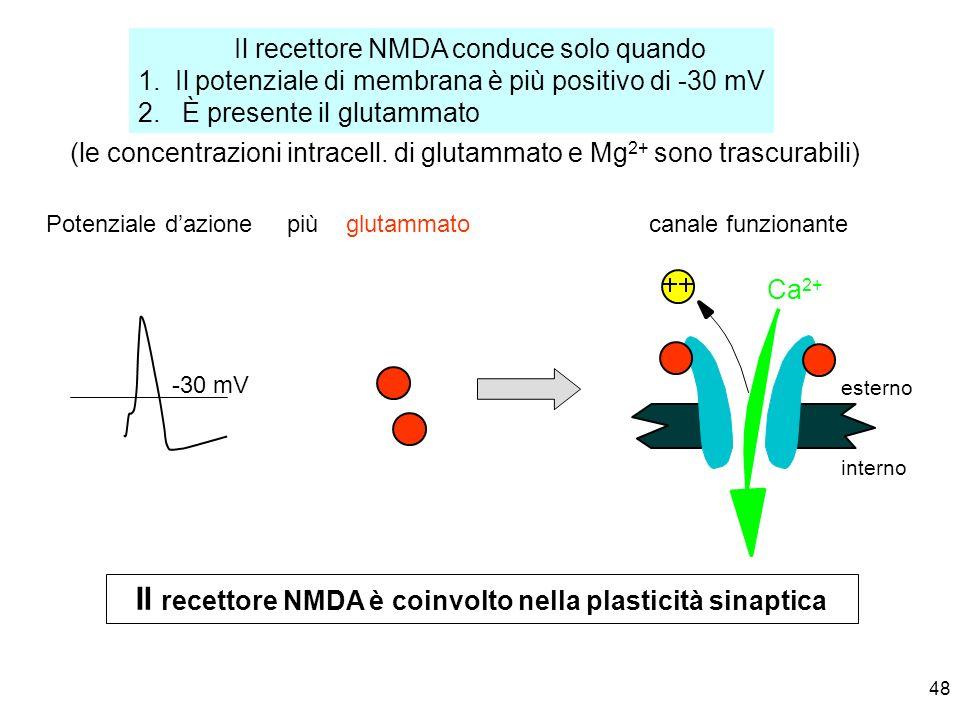 48 Il recettore NMDA conduce solo quando 1. Il potenziale di membrana è più positivo di -30 mV 2. È presente il glutammato esterno interno Potenziale