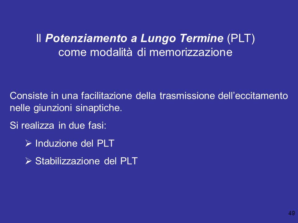49 Il Potenziamento a Lungo Termine (PLT) come modalità di memorizzazione Consiste in una facilitazione della trasmissione delleccitamento nelle giunz