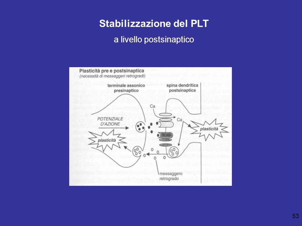 53 Stabilizzazione del PLT a livello postsinaptico