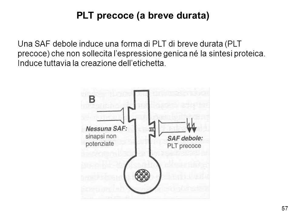 57 Una SAF debole induce una forma di PLT di breve durata (PLT precoce) che non sollecita lespressione genica né la sintesi proteica. Induce tuttavia