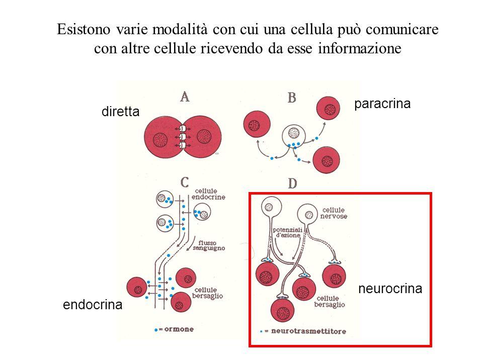 Esistono varie modalità con cui una cellula può comunicare con altre cellule ricevendo da esse informazione diretta paracrina endocrina neurocrina
