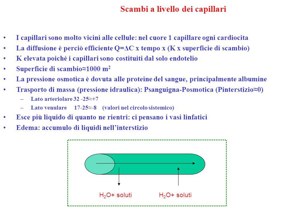 Scambi a livello dei capillari I capillari sono molto vicini alle cellule: nel cuore 1 capillare ogni cardiocita La diffusione è perciò efficiente Q=Δ