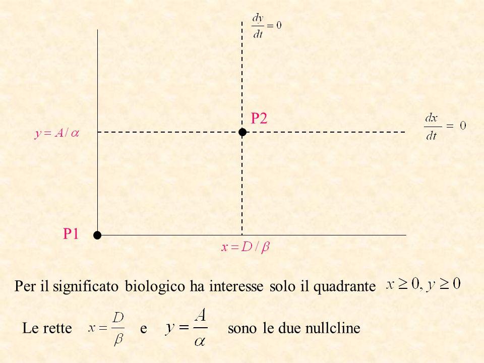 P1 P2 Per il significato biologico ha interesse solo il quadrante Le rette e sono le due nullcline