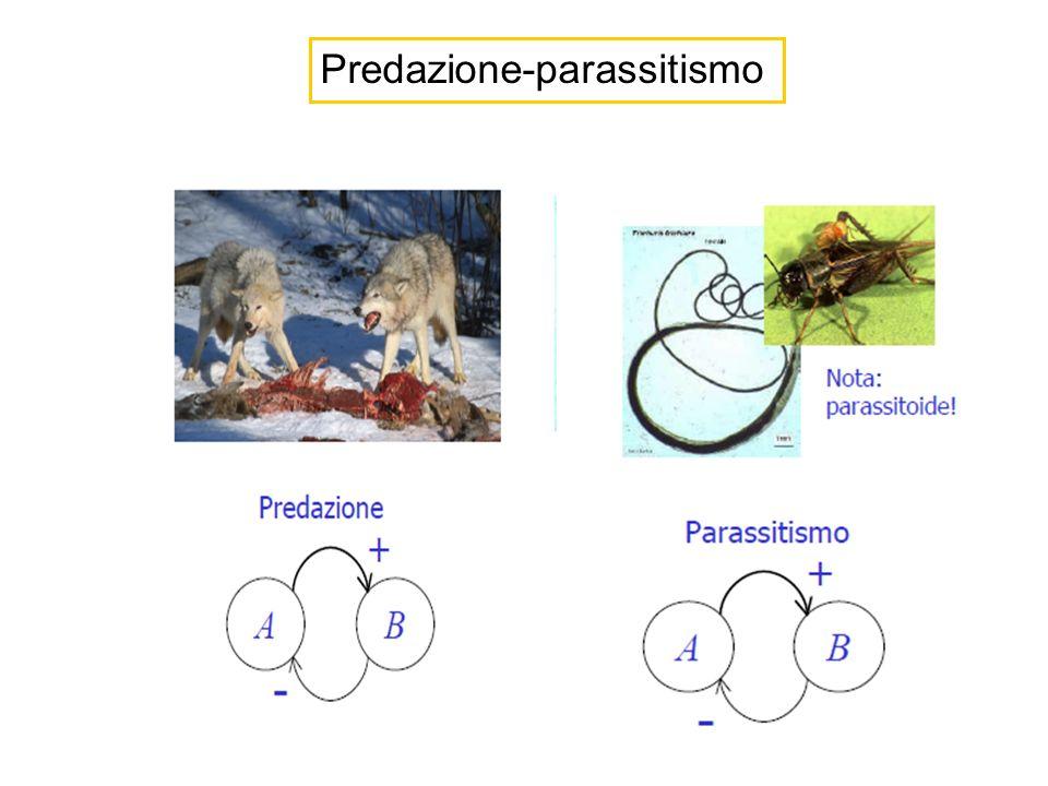 Popolazione dei predatori Popolazione delle prede In assenza di predatori: le prede aumentano in modo proporzionale (ipotesi del modello) tasso di accrescimento