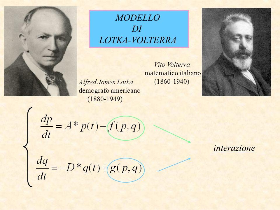MODELLO DI LOTKA-VOLTERRA interazione Alfred James Lotka demografo americano (1880-1949) Vito Volterra matematico italiano (1860-1940)