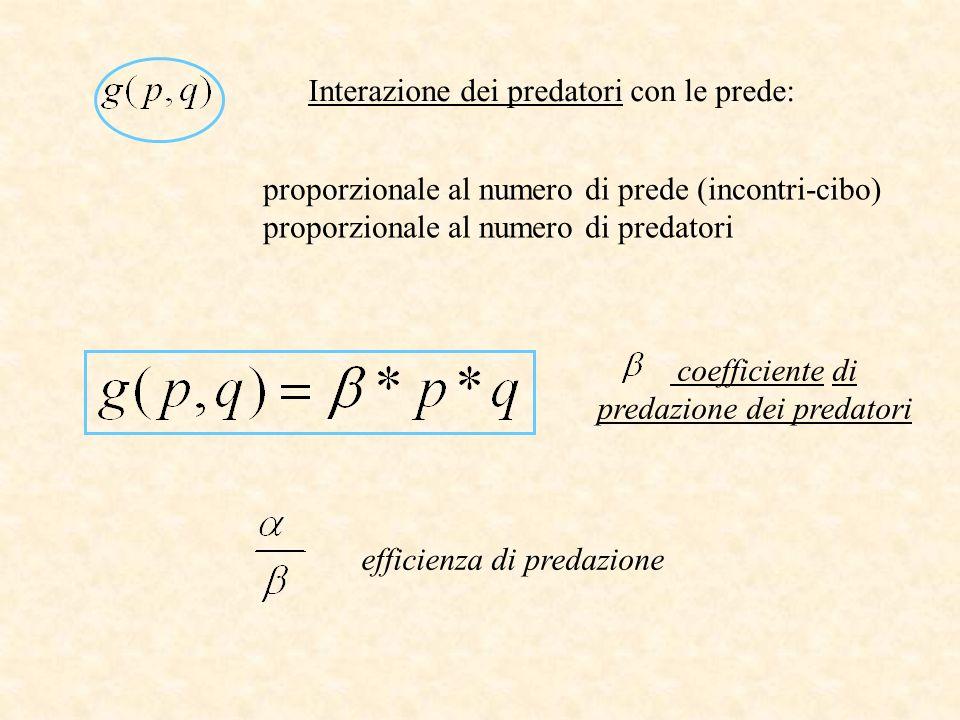 Interazione dei predatori con le prede: proporzionale al numero di prede (incontri-cibo) proporzionale al numero di predatori coefficiente di predazio