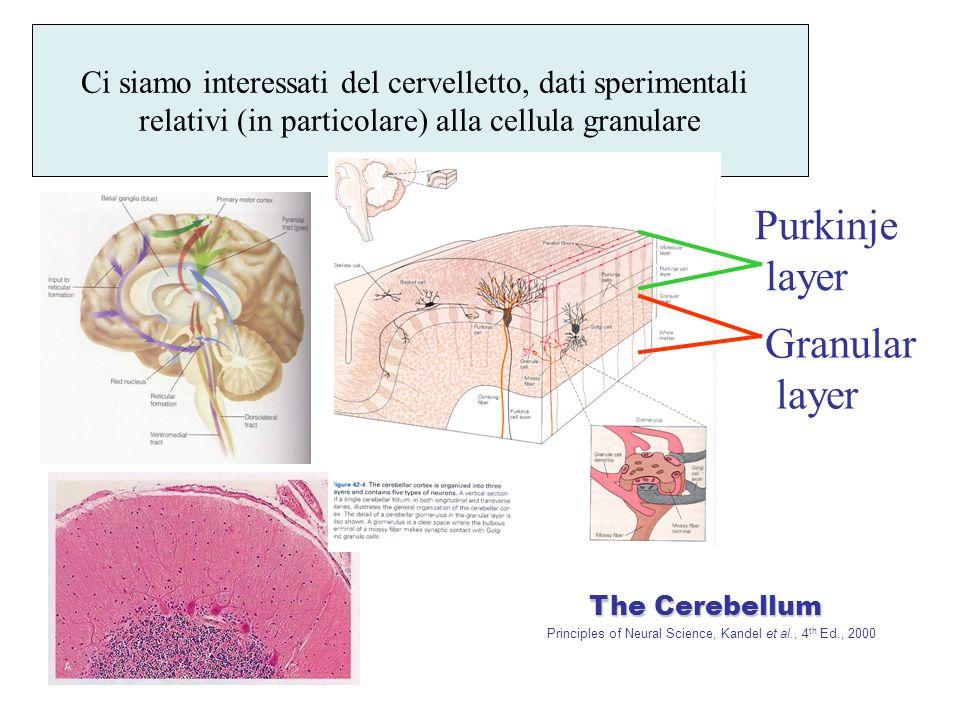 Ci siamo interessati del cervelletto, dati sperimentali relativi (in particolare) alla cellula granulare The Cerebellum The Cerebellum Principles of Neural Science, Kandel et al., 4 th Ed., 2000 Granular layer Purkinje layer