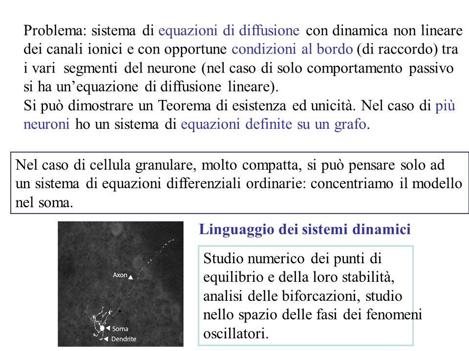 Problema: sistema di equazioni di diffusione con dinamica non lineare dei canali ionici e con opportune condizioni al bordo (di raccordo) tra i vari segmenti del neurone (nel caso di solo comportamento passivo si ha unequazione di diffusione lineare).