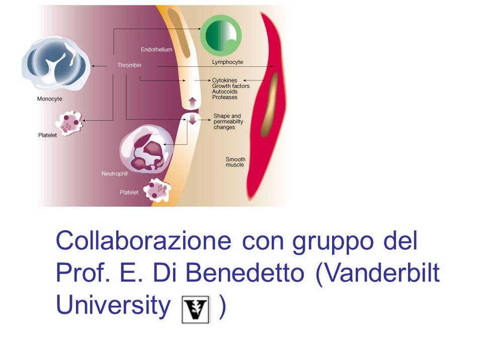 Collaborazione con gruppo del Prof. E. Di Benedetto (Vanderbilt University )