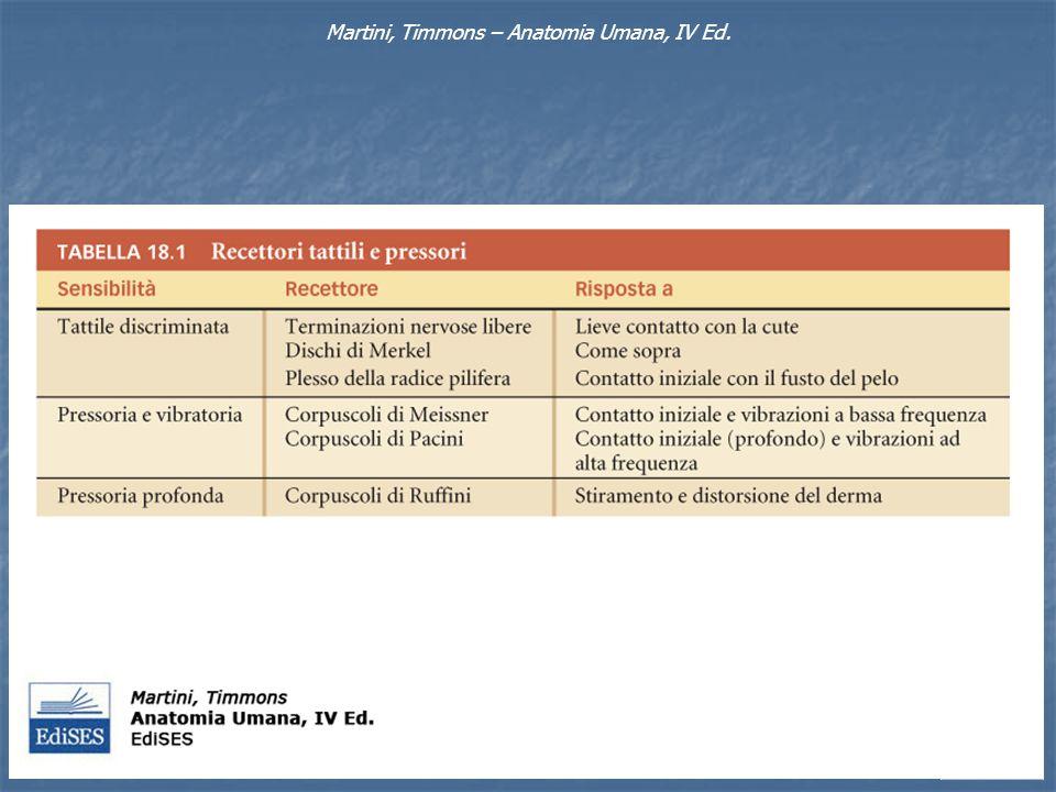 Martini, Timmons – Anatomia Umana, IV Ed.