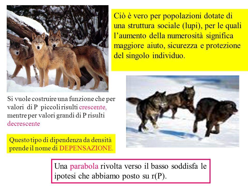 Ciò è vero per popolazioni dotate di una struttura sociale (lupi), per le quali laumento della numerosità significa maggiore aiuto, sicurezza e protez