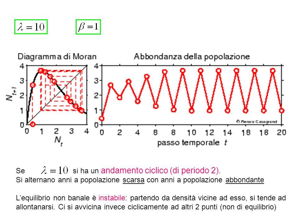 Dopo un breve transitorio, la popolazione oscilla con periodicità tra 4 valori diversi.