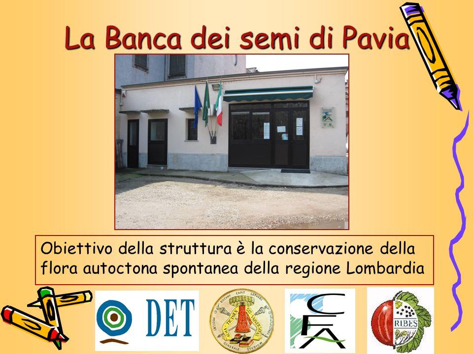 La Banca dei semi di Pavia Obiettivo della struttura è la conservazione della flora autoctona spontanea della regione Lombardia
