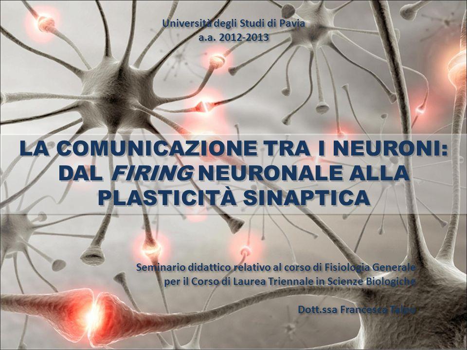 LA COMUNICAZIONE TRA I NEURONI: DAL FIRING NEURONALE ALLA PLASTICITÀ SINAPTICA Seminario didattico relativo al corso di Fisiologia Generale per il Cor