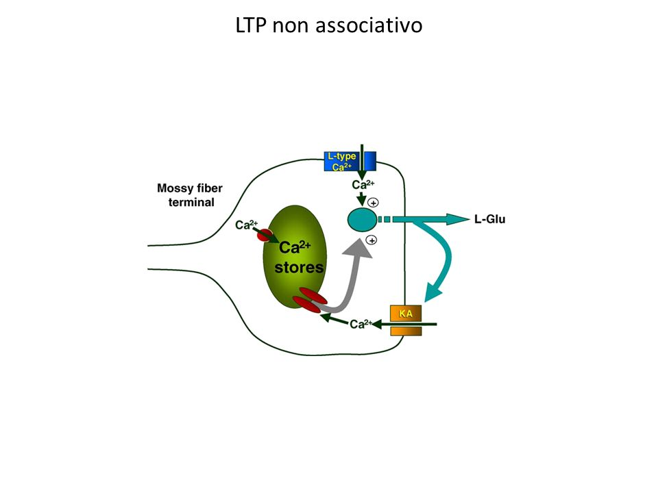 LTP non associativo