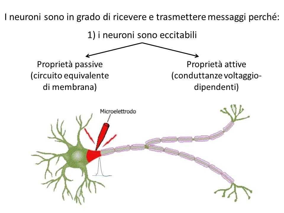 I neuroni sono in grado di ricevere e trasmettere messaggi perché: 1) i neuroni sono eccitabili Proprietà passive (circuito equivalente di membrana) P