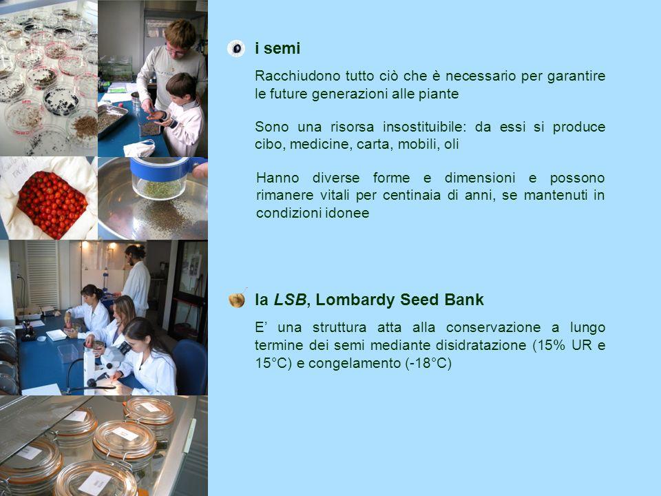il progetto nei fatti la LSB è nata nel febbraio 2005 oltre 1800 campioni di semi conservati (al 2009) 1/3 della flora lombarda minacciata già conservato cooperazioni con 24 Istituzioni a livello internazionale (ENSCONET) e 18 a livello nazionale (RIBES) gli enti coinvolti La LSB è una struttura che fa capo al CFA, Centro Flora Autoctona della Regione Lombardia Il CFA è gestito, su delega regionale, dal Parco del Monte Barro (LC) Al CFA collaborano le Università degli Studi dellInsubria (VA) e di Pavia e la Fondazione Minoprio Tel +39 0382 9848 54/83 andrea.mondoni@unipv.it emanuelevegini@yahoo.it Visita il progetto presso la sede operativa della LSB c/o DET- Università degli Studi di Pavia Via S.