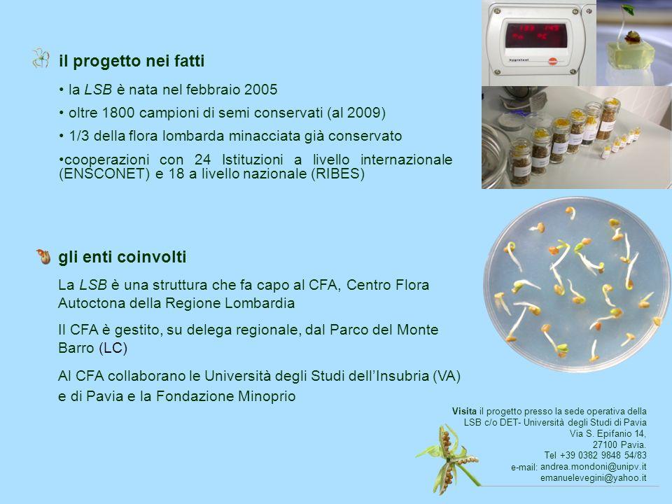 il progetto nei fatti la LSB è nata nel febbraio 2005 oltre 1800 campioni di semi conservati (al 2009) 1/3 della flora lombarda minacciata già conserv
