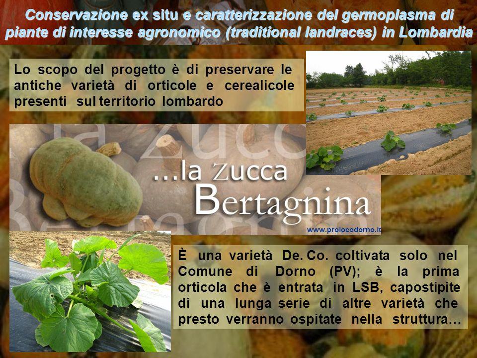 Conservazione ex situ e caratterizzazione del germoplasma di piante di interesse agronomico (traditional landraces) in Lombardia È una varietà De. Co.