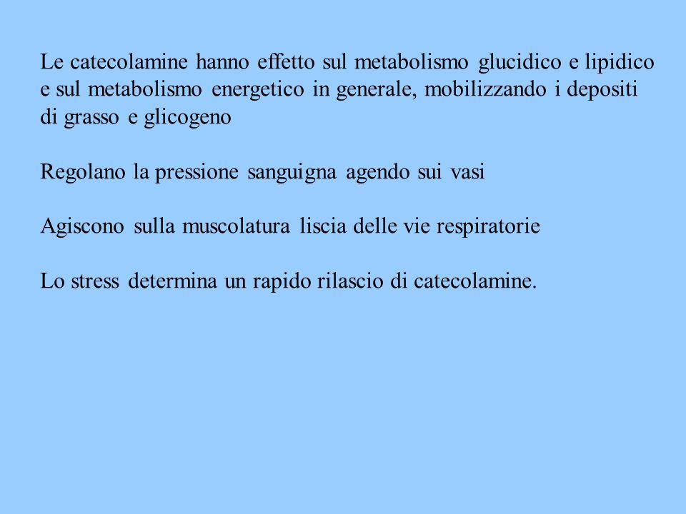 Le catecolamine hanno effetto sul metabolismo glucidico e lipidico e sul metabolismo energetico in generale, mobilizzando i depositi di grasso e glico