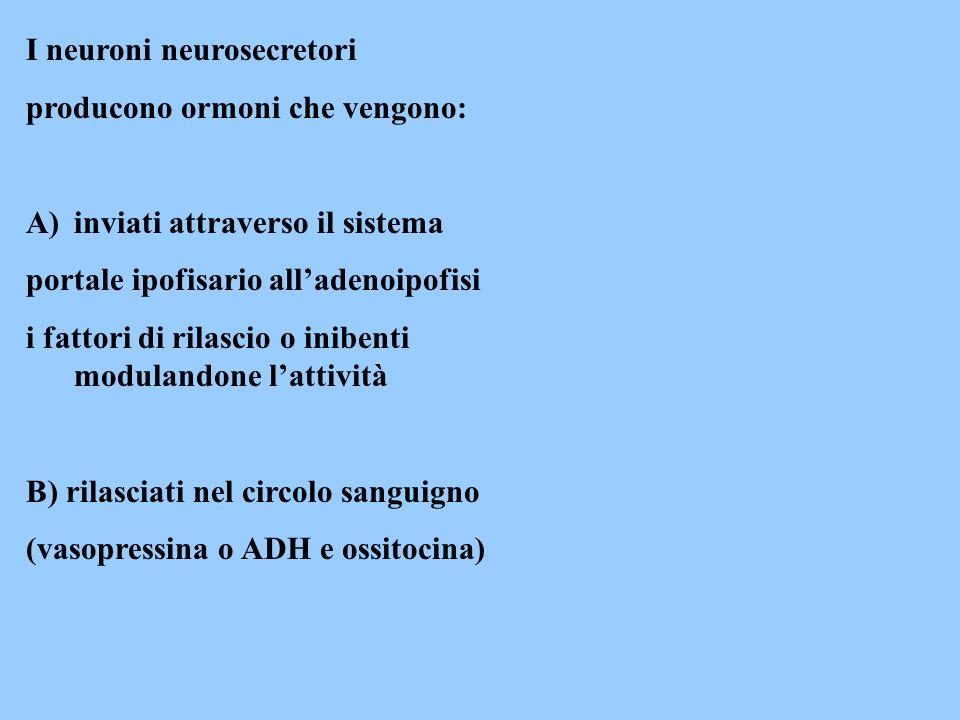 Ormoni prodotti dalla neuroipofisi e rilasciati nel circolo sistemico sono: ossitocina che provoca contrazioni delle fibrocellule muscolari lisce dellutero e della gh.