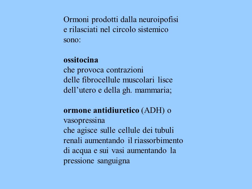 Ormoni prodotti dalla neuroipofisi e rilasciati nel circolo sistemico sono: ossitocina che provoca contrazioni delle fibrocellule muscolari lisce dell