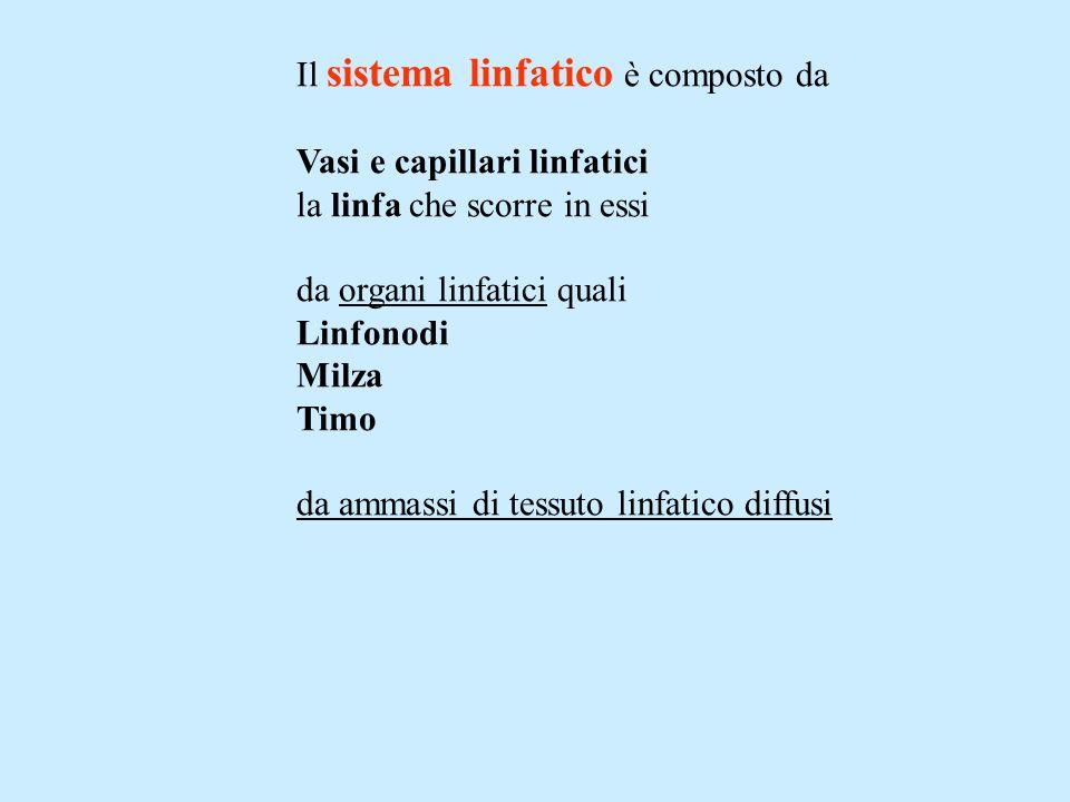 Il sistema linfatico è composto da Vasi e capillari linfatici la linfa che scorre in essi da organi linfatici quali Linfonodi Milza Timo da ammassi di tessuto linfatico diffusi